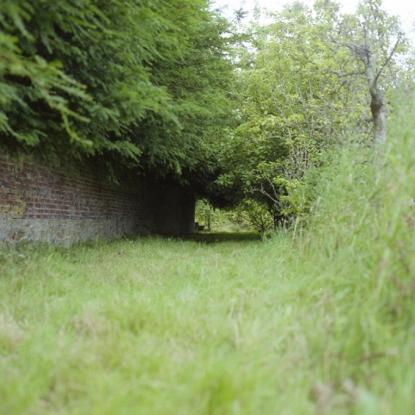 Photographers_Garden_July_16352.jpg
